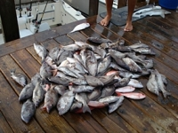 Carolina Beach Fishing Charters Photo Gallery (1)